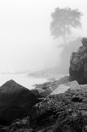lone tree at the sea's edge, dense fog