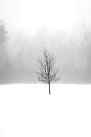 sapling, winter, fog