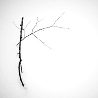 winter branches, study 3