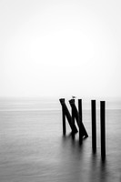 pilings and gull